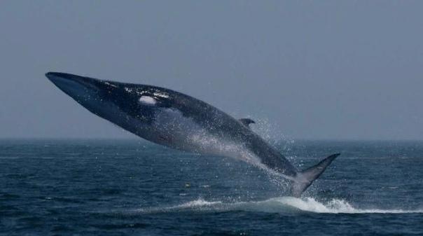 История «пророк Иона в чреве кита»  правда или притча